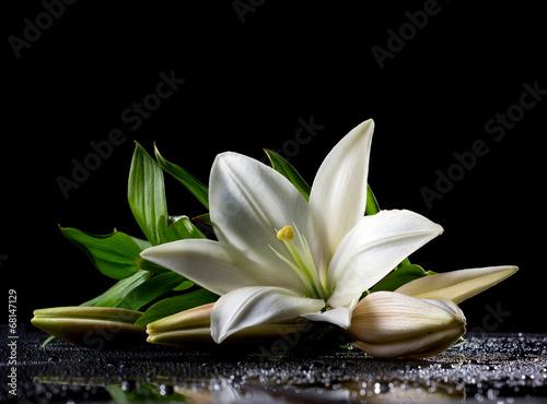 Poster de jardin Nénuphars white freshness lily