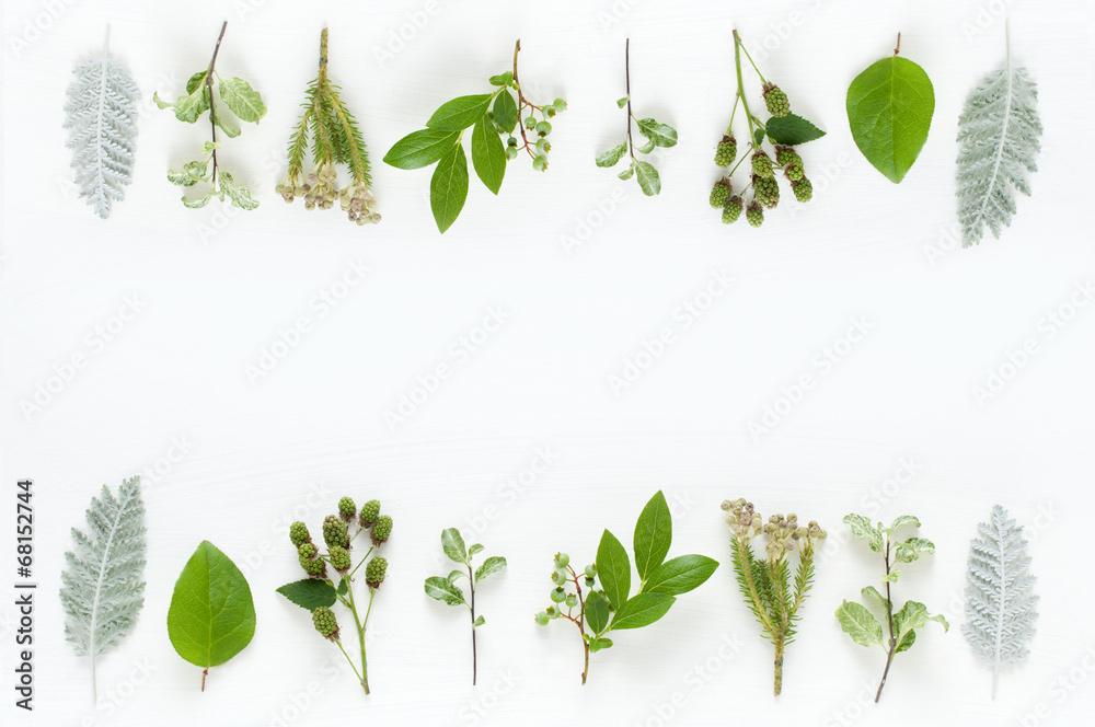 Fototapety, obrazy: 葉っぱ 植物 ナチュラルイメージ