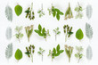 canvas print picture - 葉っぱ 植物 ナチュラルイメージ