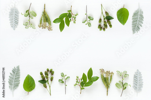 Foto  Blätter pflanzen natürliches Bild