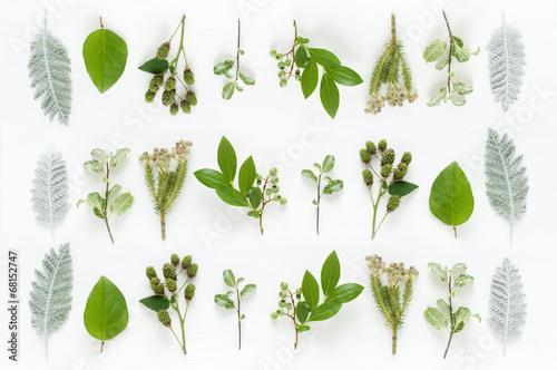 葉っぱ 植物 ナチュラルイメージ