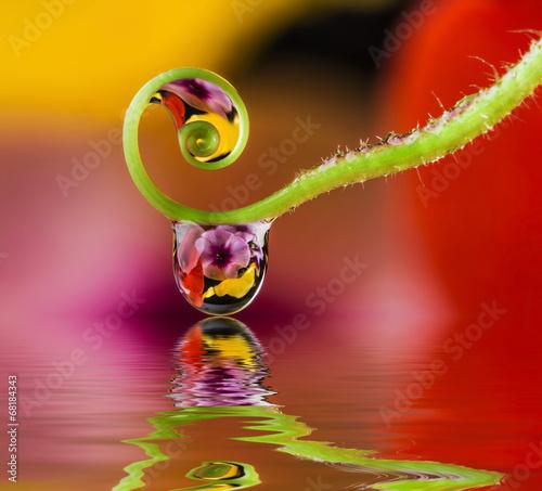Türaufkleber Makrofotografie flower and dew drops
