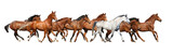 Konie galopujące na białym tle