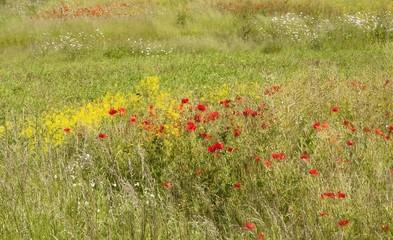 Fototapeta Łąka Painterly meadow background
