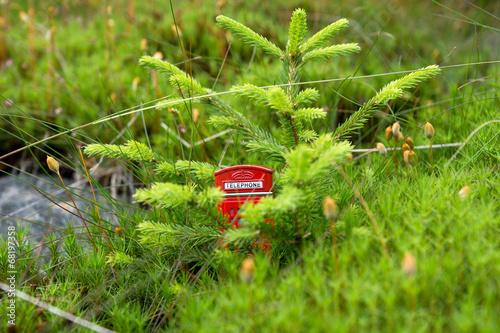 Fotografie, Obraz  Rote Telefonzelle im Wald
