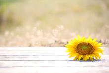 Beautiful Sunflower On Table O...