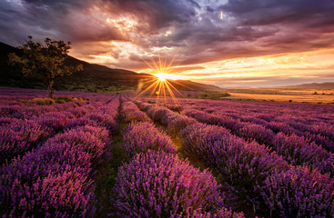 Naklejka Stunning landscape with lavender field at sunrise