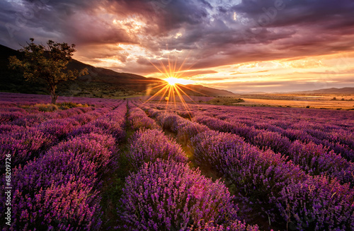 Fotobehang Crimson Stunning landscape with lavender field at sunrise