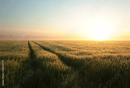 Foto auf Gartenposter Landschappen Sunrise over a field of grain