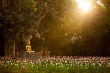 Field Of Tulips In Wat Phan Ta...