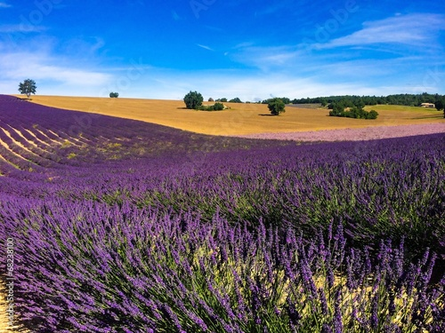Papiers peints Aubergine lavender in the landscape