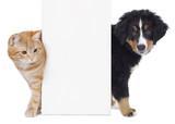 Pies i kot za białym plakatem