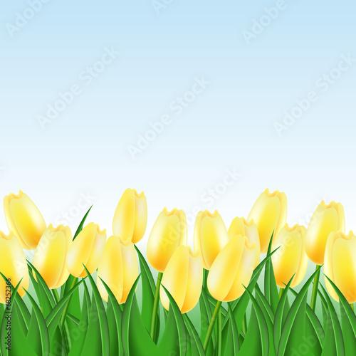 Foto op Canvas Bloemen поле желтых тюльпанов