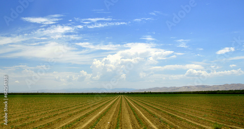 Fotografie, Obraz  Tree Road Valley desert California.