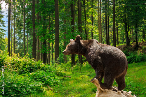 Tela  curious little bear in the forest
