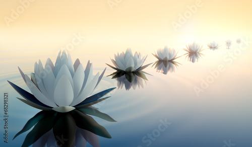 Foto op Canvas Lotusbloem Lotus im See 2