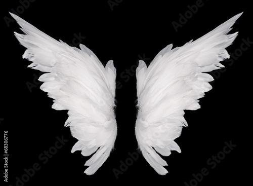 Fényképezés  wings