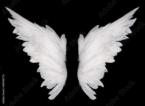 Fotografia, Obraz  wings