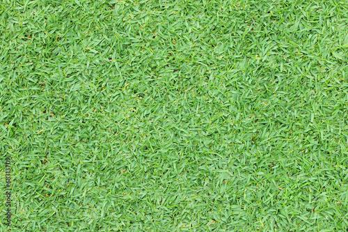Foto op Plexiglas Groene Beautiful fresh green grass texture background