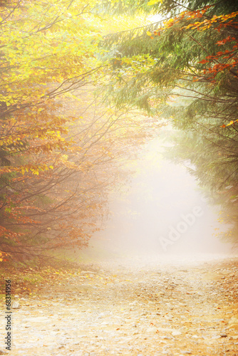 Fototapety, obrazy: Autumn forest. Beautiful forest with country road at sunset. Colorful landscape with trees rural road orange and red leaves sun. Travel. Autumn background. Amazing forest with vibrant foliage