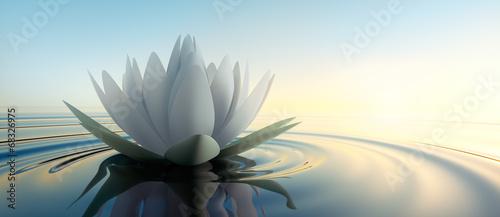 Obraz lilia wodna lilia-wodna-unoszaca-sie-na-stawie