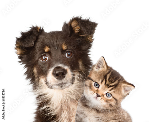 closeup puppy dog and kitten together. isolated on white backgro © Ermolaev Alexandr