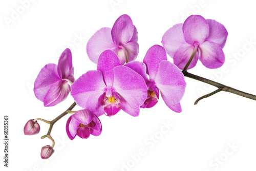 In de dag Orchidee Orchid on White
