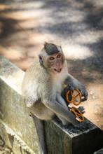 Monkey Eating Crackers