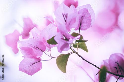 Papiers peints Azalea Paper flowers or Bougainvillea vintage