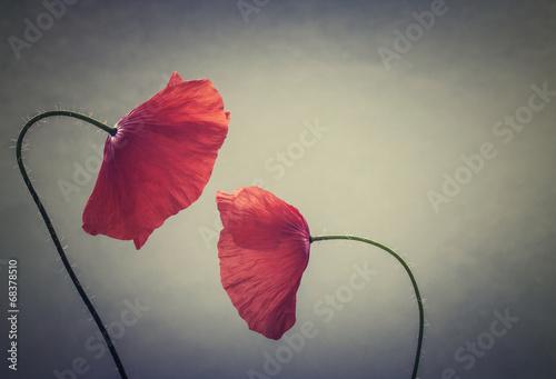 art poppies - 68378510