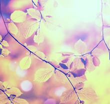 Autumn Retro Tree Leaves