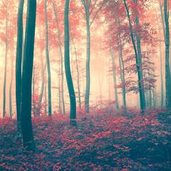 FototapetaRed vintage forest