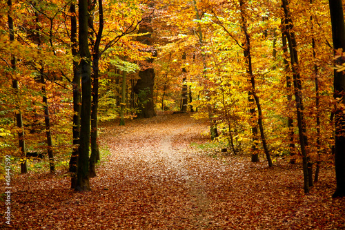 fall in a park Canvas Print