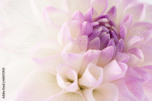 Aluminium Prints Floral White dahlia close-up