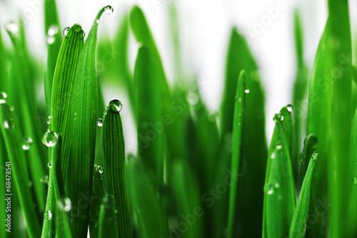 fototapeta na szkło zielona trawa