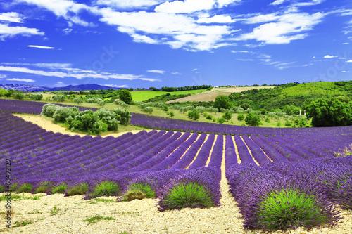 Montage in der Fensternische Lavendel beautiful lavander fields, Provance, Valensole, France