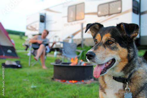 Fotografie, Obraz  Dog at Campground in Front of Man Playing Guitar