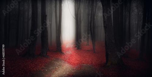 Ingelijste posters Zwart Dark trails in the forest during a foggy autumn day