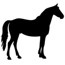 Black Horse Silhouette 2