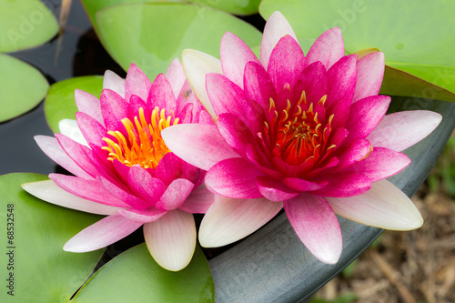 Staande foto Lotusbloem Twin lotus