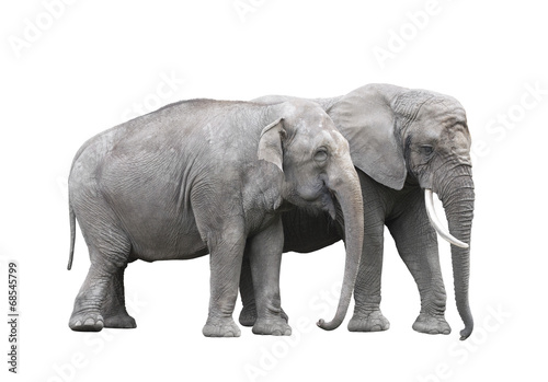 Foto op Aluminium Olifant Pair of elephants isolated on white with clipping path