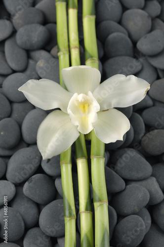 biala-orchidea-i-zestaw-bambusowego-gaju-na-szarych-kamieniach