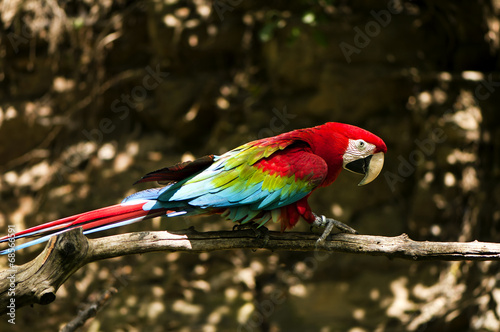 Foto op Aluminium Papegaai Red-and-green macaw