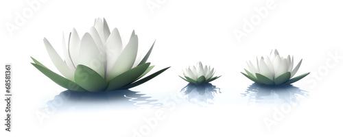 Foto op Canvas Lotusbloem Lotusblüten