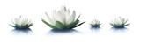 Fototapeta Kwiaty - Lotusblüten 2