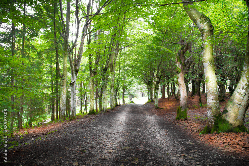 Fototapeta strada nel bosco