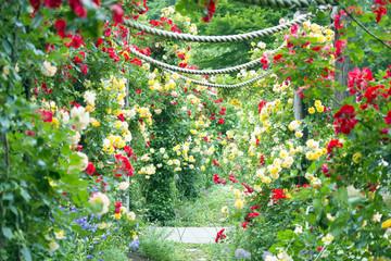 Panel Szklany Podświetlane Róże バラのアーチ バラ園 小径