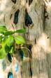 canvas print picture - Baumstamm mit Blaetter im Sonnenlicht