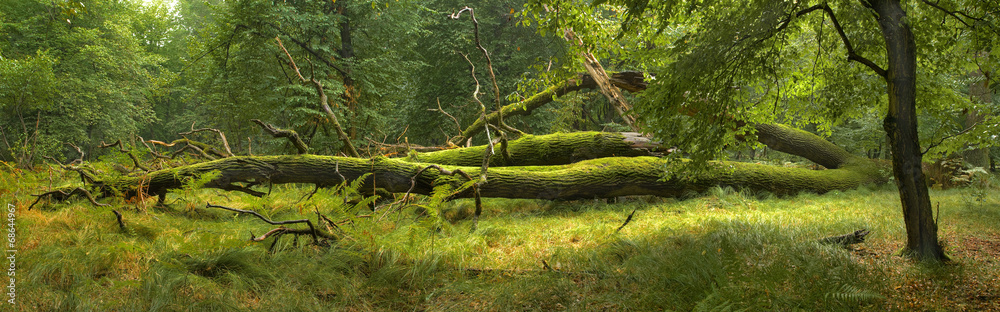 Photo  Panoramic view of the forest