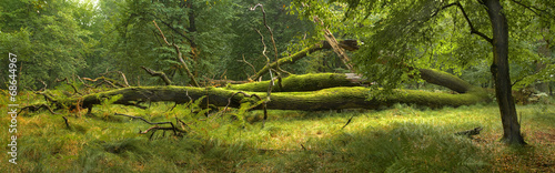 Foto auf Gartenposter Wald Panoramic view of the forest